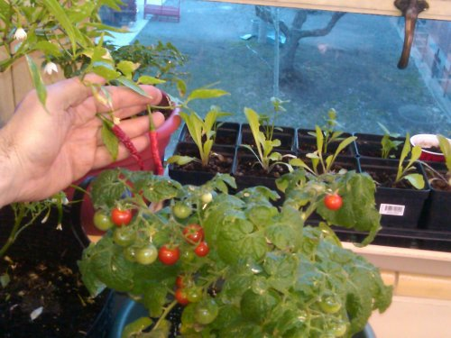 Gardening in the Classroom